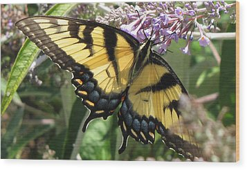 Wood Print featuring the photograph Old World Swallowtail by Jennifer Wheatley Wolf