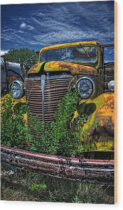 Wood Print featuring the photograph Old Yeller by Ken Smith