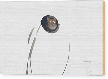 Olga Cat Reflected In Drawer Knob Wood Print by Kathy Barney