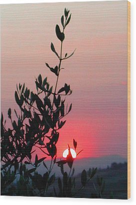 Olive Tree At Sunset Wood Print by Dorothy Berry-Lound