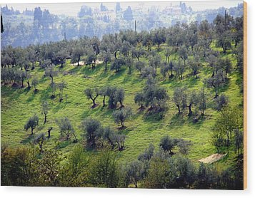Olive Trees And Shadows Wood Print