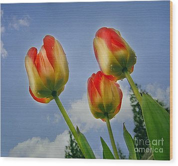 Olympic Flame Tulips Wood Print by MaryJane Armstrong