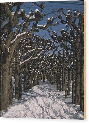 On A Cold Winter Day Wood Print by Angela Bruno