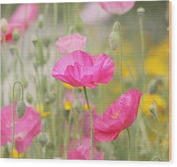 On A Summer Day - Pink Poppy Wood Print by Kim Hojnacki
