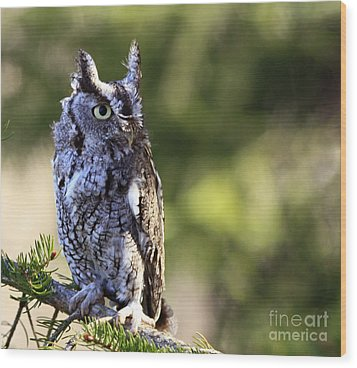 On Alert Majestic Eastern Screech Owl  Wood Print by Inspired Nature Photography Fine Art Photography