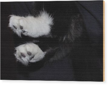 On Little Cat Feet Wood Print by Marilyn Wilson