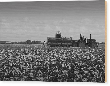 Wood Print featuring the photograph On The Farm by Ricky L Jones