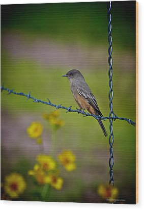 Wood Print featuring the photograph Say's Phoebe by Britt Runyon