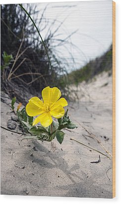 Wood Print featuring the photograph On The Path by Sennie Pierson