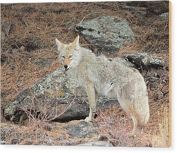 On The Prowl Wood Print by Shane Bechler