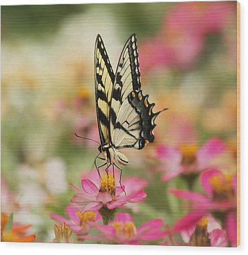 On The Top - Swallowtail Butterfly Wood Print by Kim Hojnacki