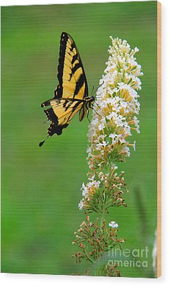On The Wings Of A Butterfly Wood Print