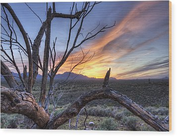 Wood Print featuring the photograph Once Mesquite by Anthony Citro