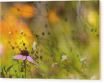 Wood Print featuring the photograph Once Upon A Time There Lived A Flower by Mary Amerman