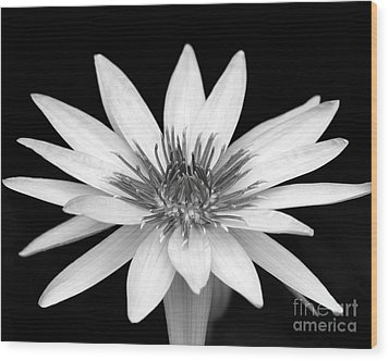 One Black And White Water Lily Wood Print by Sabrina L Ryan