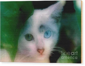 One Blue One Green Cat In New Olreans Wood Print