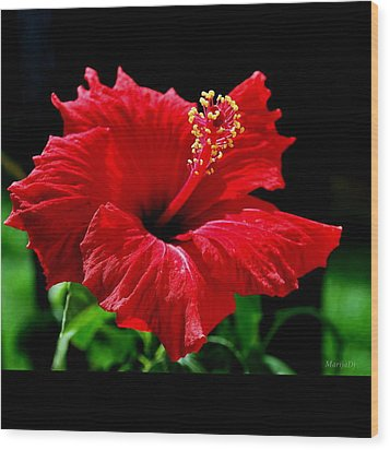 One Day Flower Wood Print by Marija Djedovic