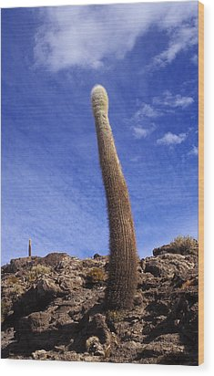 Wood Print featuring the photograph One Enormous Cactus by Lana Enderle