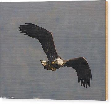 One Eye On You  Wood Print by Glenn Lawrence