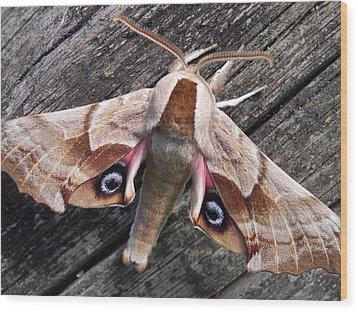 One-eyed Sphinx Wood Print