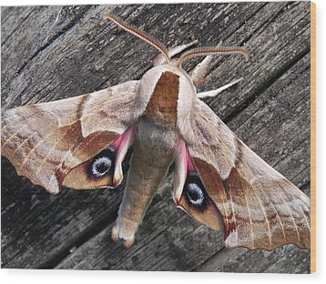 One-eyed Sphinx Wood Print by Cheryl Hoyle