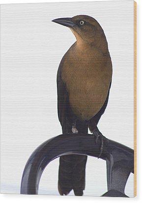 One Foot Bird Wood Print by DerekTXFactor Creative