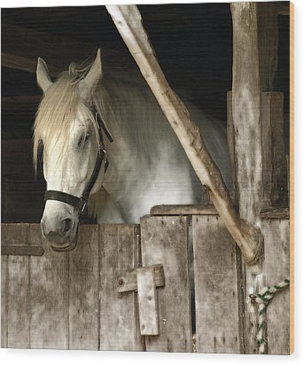 Wood Print featuring the photograph One Horse  by Raymond Earley