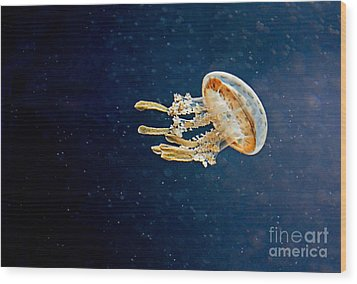 One Jelly Fish Art Prints Wood Print by Valerie Garner