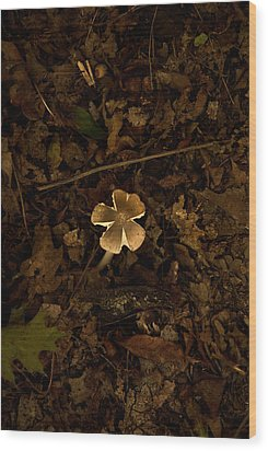 Wood Print featuring the photograph One Little Mushroom by Lena Wilhite