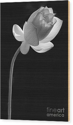 One Lotus Bud Wood Print