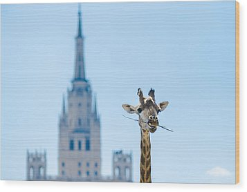 One More Bite To Outgrow The Tallest 2 Wood Print by Alexander Senin