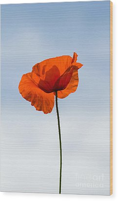 One Poppy Wood Print by Anne Gilbert