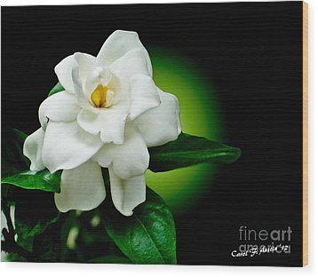 One Sensual White Flower Wood Print by Carol F Austin