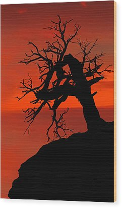 One Tree Hill Silhouette Wood Print by Greg Norrell