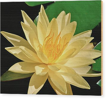 One Water Lily  Wood Print