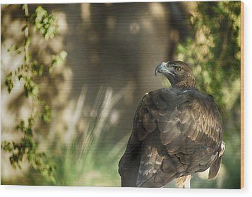 Only An Eagle Can Be As Sharp As An Eagle Wood Print by Munir El Kadi