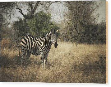 Wood Print featuring the photograph Only One by Kim Andelkovic