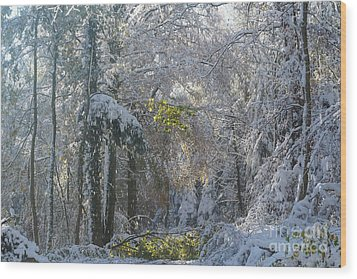 Wood Print featuring the photograph Onset Of Winter 1 by Rudi Prott