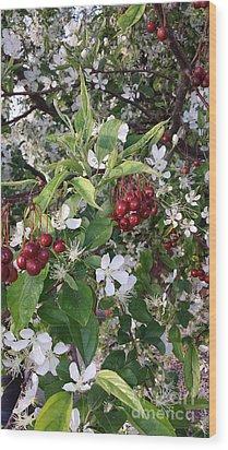 Oo Oo Oo Cherry Baby Wood Print