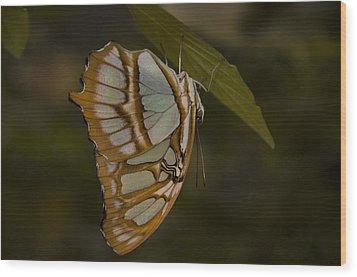 Opal Wood Print by Penny Lisowski