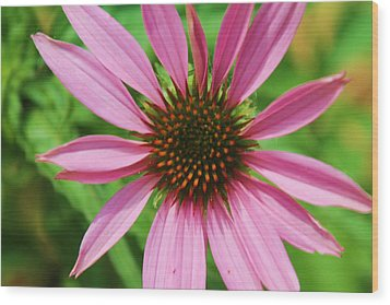 Wood Print featuring the photograph Open Bloom by Alicia Knust