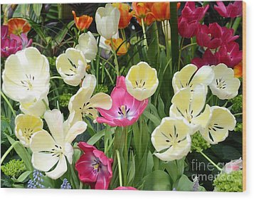Open Tulips Wood Print by Kathleen Struckle