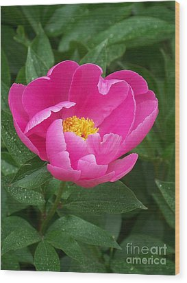 Wood Print featuring the photograph Peony  by Eunice Miller