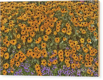 Wood Print featuring the photograph Orange And Purple Daises by Jim Lepard