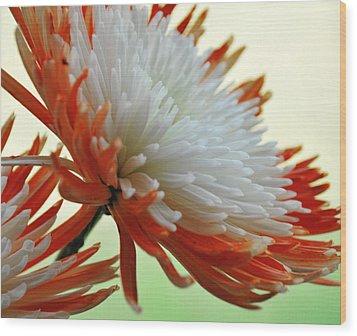 Orange And White Flower Wood Print