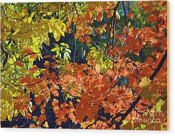 Orange And Yellow Wood Print by Kathleen Struckle