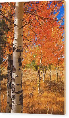 Wood Print featuring the photograph Orange Aspens by Aaron Whittemore