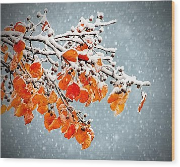 Wood Print featuring the photograph Orange Autumn Leaves In Snow by Tracie Kaska