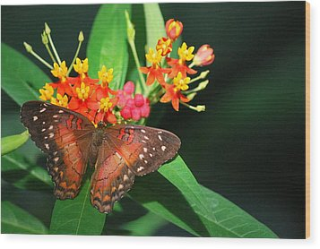 Wood Print featuring the photograph Orange Beauty by Amee Cave