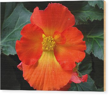 Orange Beauty Wood Print